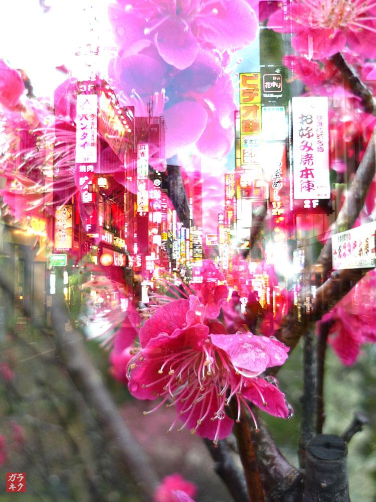 Rakugaki-Photography