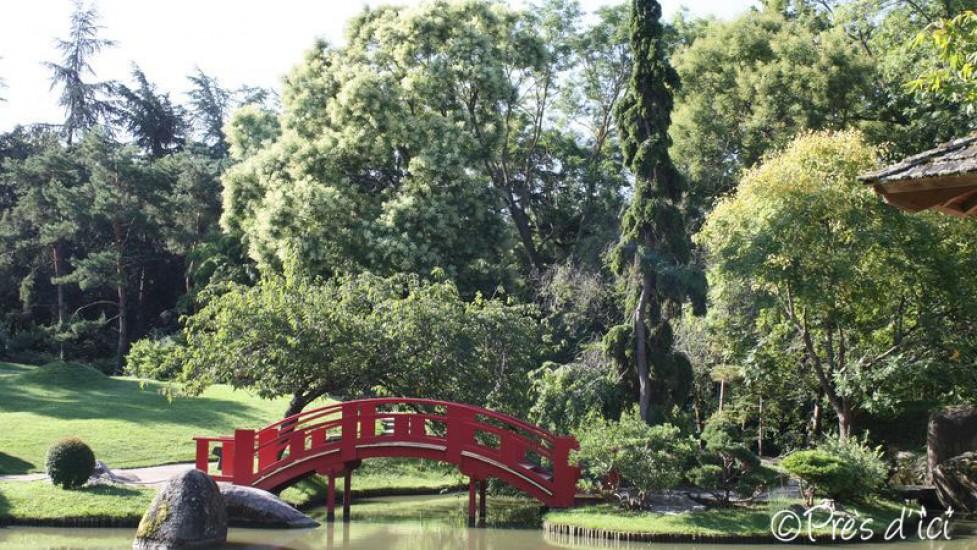 Visite racontée du jardin japonais